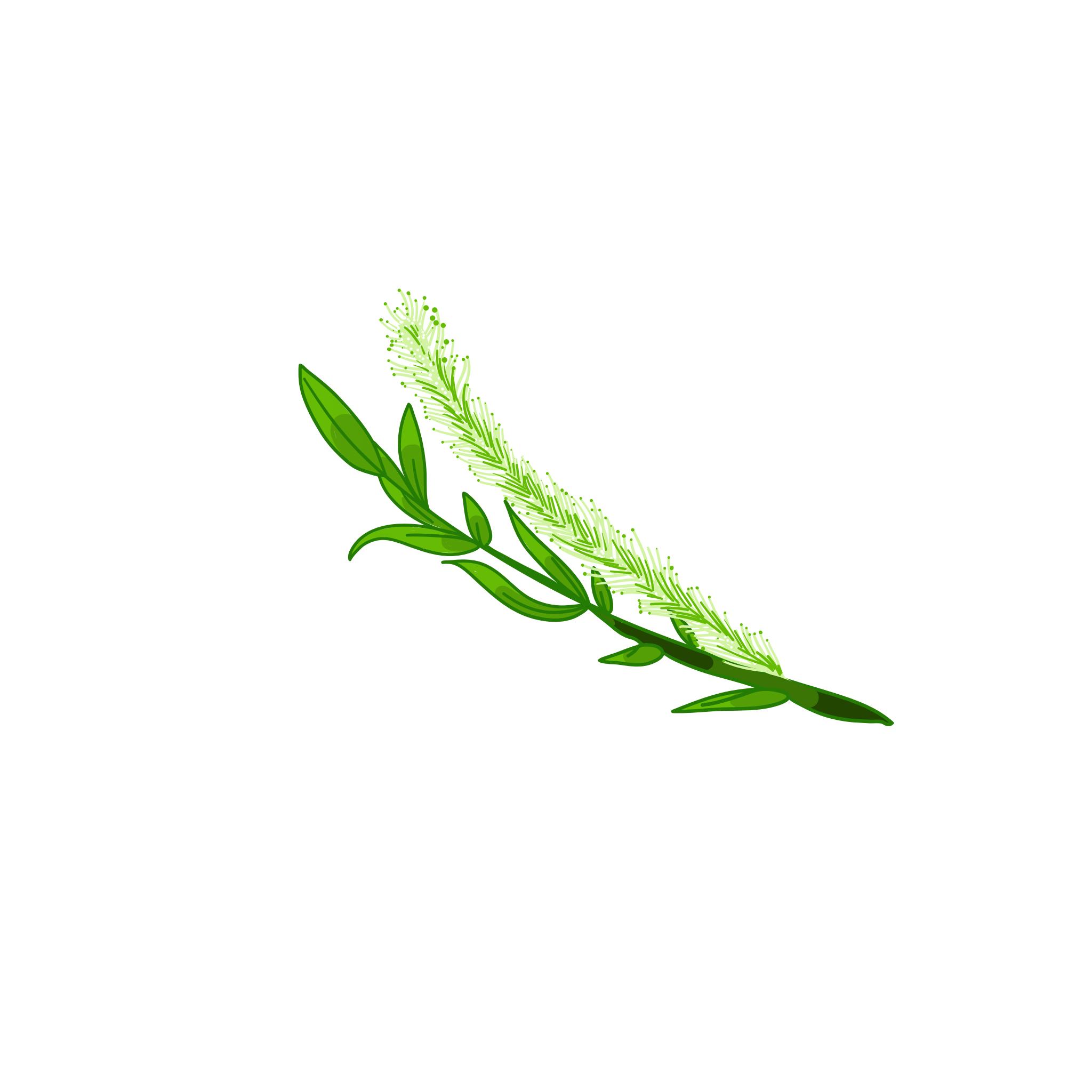 fermentierter Silberweiden-Extrakt